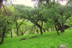 Природа деревьев Стоковое Изображение RF