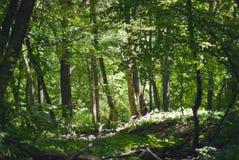 Природа леса области Саратова Стоковые Изображения RF