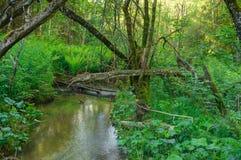 Природа леса, солнце заводи Стоковые Изображения