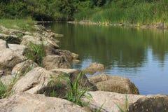 Природа леса травы воды камня утеса реки Стоковое Фото