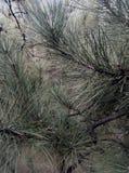 Природа, лес Стоковое фото RF