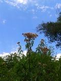 Природа лета, цветки и голубое небо Стоковые Изображения