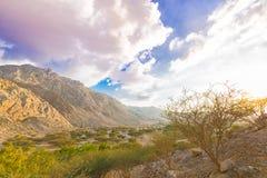 Природа живой природы в ОАЭ стоковая фотография