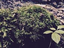 Природа жизни Стоковое фото RF