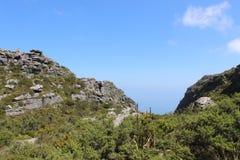 Природа, заводы, кустарники, вегетация, утесы na górze национального парка горы таблицы, перемещения Кейптауна Южной Африки Стоковая Фотография RF
