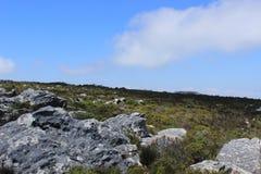 Природа, заводы, утесы na górze национального парка горы таблицы, перемещения Кейптауна Южной Африки Стоковое Изображение