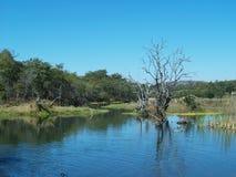 природа Зимбабве Стоковое Изображение RF
