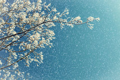 Природа зимы в снежностях Ветви дерева зимы морозные дерева зимы против неба зимы Стоковые Изображения