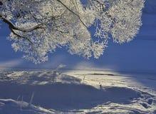 Природа зимы Стоковая Фотография