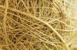 Природа золота Стоковое Изображение