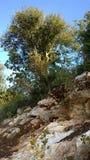 Природа Израиля Стоковые Изображения RF
