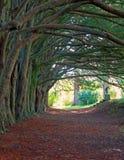 Природа Ирландия Стоковые Изображения
