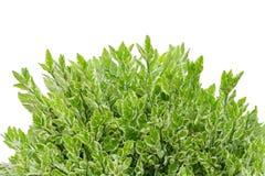 природа листьев предпосылки зеленая иллюстрация вектора