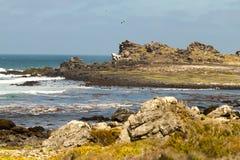 Природа и заповедник Чили стоковое изображение