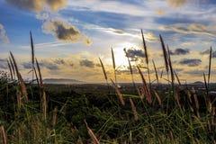 Природа и солнце Стоковые Фотографии RF