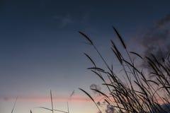 Природа и солнце Стоковое фото RF