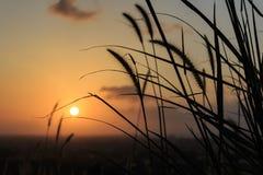 Природа и солнце Стоковое Изображение RF