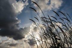 Природа и солнце Стоковое Изображение