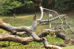 Природа Камбоджа Стоковое Изображение