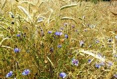 Природа красоты, лето, влюбленность Стоковое Изображение RF