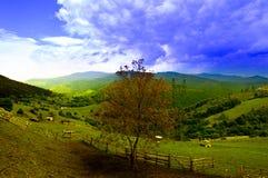 Природа к деревне Стоковая Фотография RF