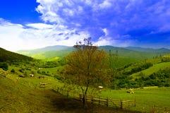 Природа к деревне Стоковые Фото