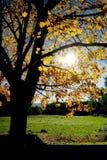 природа ландшафта Стоковая Фотография