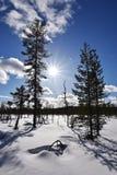 Природа Лапландии Стоковое Изображение