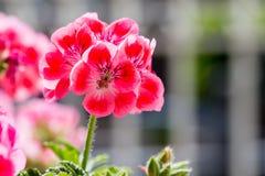 природа макроса цветка состава Стоковые Изображения RF
