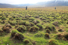 Природа на Свальбарде Стоковое фото RF