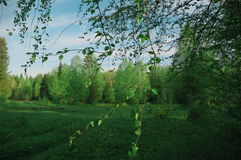 Природа, облака неба лесных деревьев Стоковое фото RF