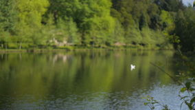 Природа озера сток-видео