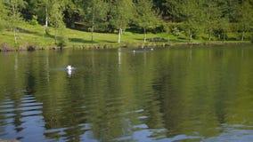 Природа озера видеоматериал