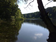 Природа озера Стоковые Фото