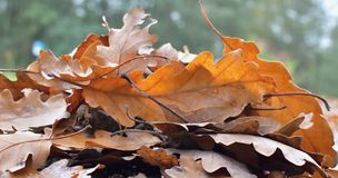 природа осени голубая длинняя затеняет небо Стоковые Фото