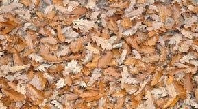 природа осени голубая длинняя затеняет небо Стоковое Фото