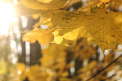 природа осени голубая длинняя затеняет небо Стоковое Изображение RF