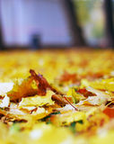 Природа осени: листья упаденные желтым цветом в парке Стоковые Изображения