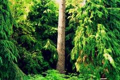 Природа пейзажа лесных деревьев зеленая Стоковое фото RF