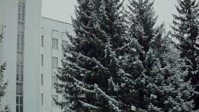 Природа после первых снежностей акции видеоматериалы