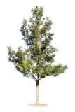 природа предпосылки зеленая представляет белизну вала весны сезона Стоковая Фотография RF