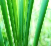 природа предпосылки зеленая Стоковое Фото