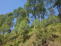 природа предпосылки зеленая Стоковое Изображение RF