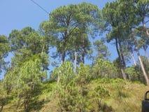 природа предпосылки зеленая Стоковые Изображения