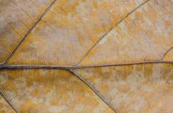 Природа предпосылки текстуры лист крупного плана коричневая сухая Стоковые Фото