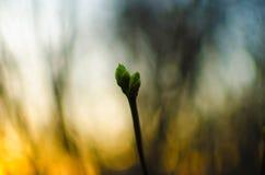 Природа просыпает вверх Стоковые Изображения