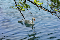 Природа, птицы стоковые изображения rf