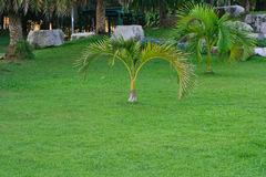 Природа сада Стоковая Фотография