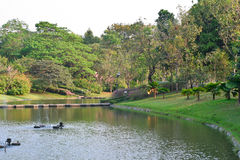 Природа сада Стоковые Фото