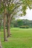 Природа сада Стоковое Фото